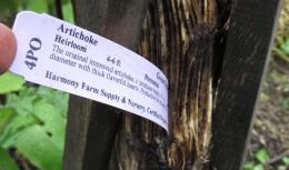 Last season's artichoke is overwintering insect habitat.