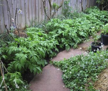 20100604 LTH -- potatoes