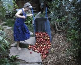 20110929-LTH-Apples
