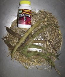 20120111-LTH-veggy-planting