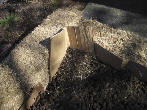 Soil corral reinforced with cardboard corner.