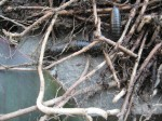 spore lore, habitat it and they will come, tony mcguigan, garden, gardening, gardens, native plants, permaculture, wildlife garden, habitat garden, conservation, centipede, yarrow thatch