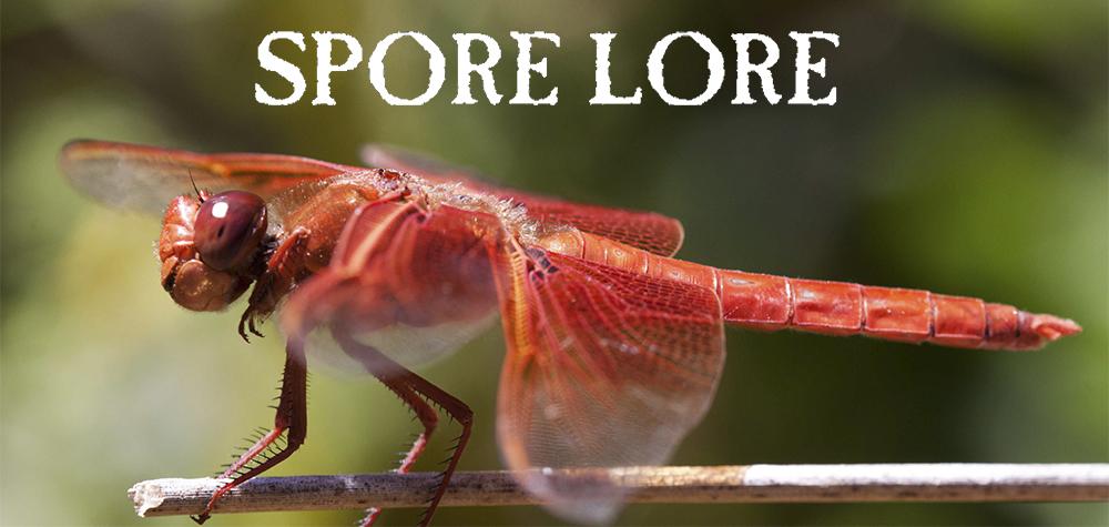 Spore Lore