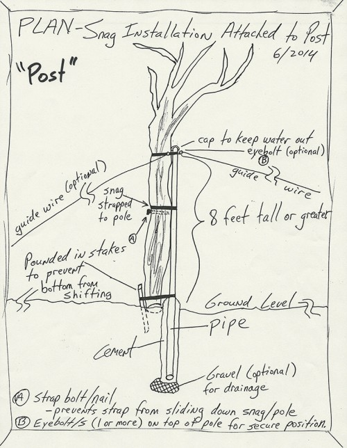 spore lore, habitat it and they will come, tony mcguigan, garden, soil, soil under my nails, gardening, gardens, native plants, permaculture, wildlife garden, environmental education, ecological landscaping, snag, Native Plants and Wildlife Gardens, tree snag, dead tree, Scrub Jay, bird perch