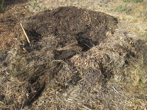 sorting the compost pile
