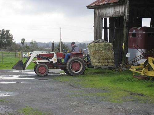 movin' hay